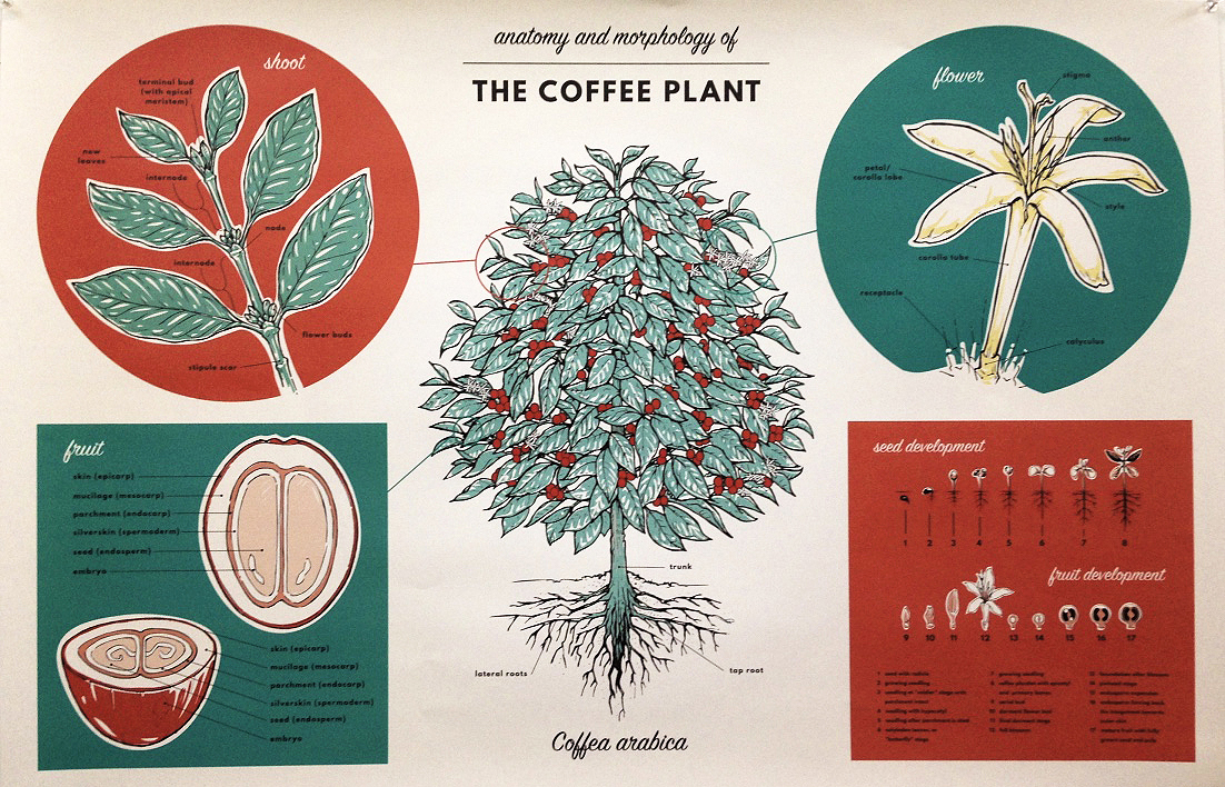 The Story of Coffee – E-Squared Magazine