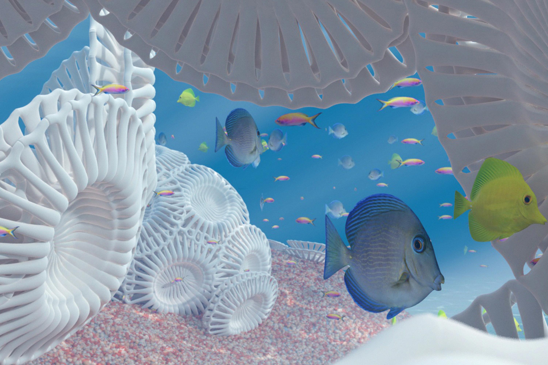 reef-news-2
