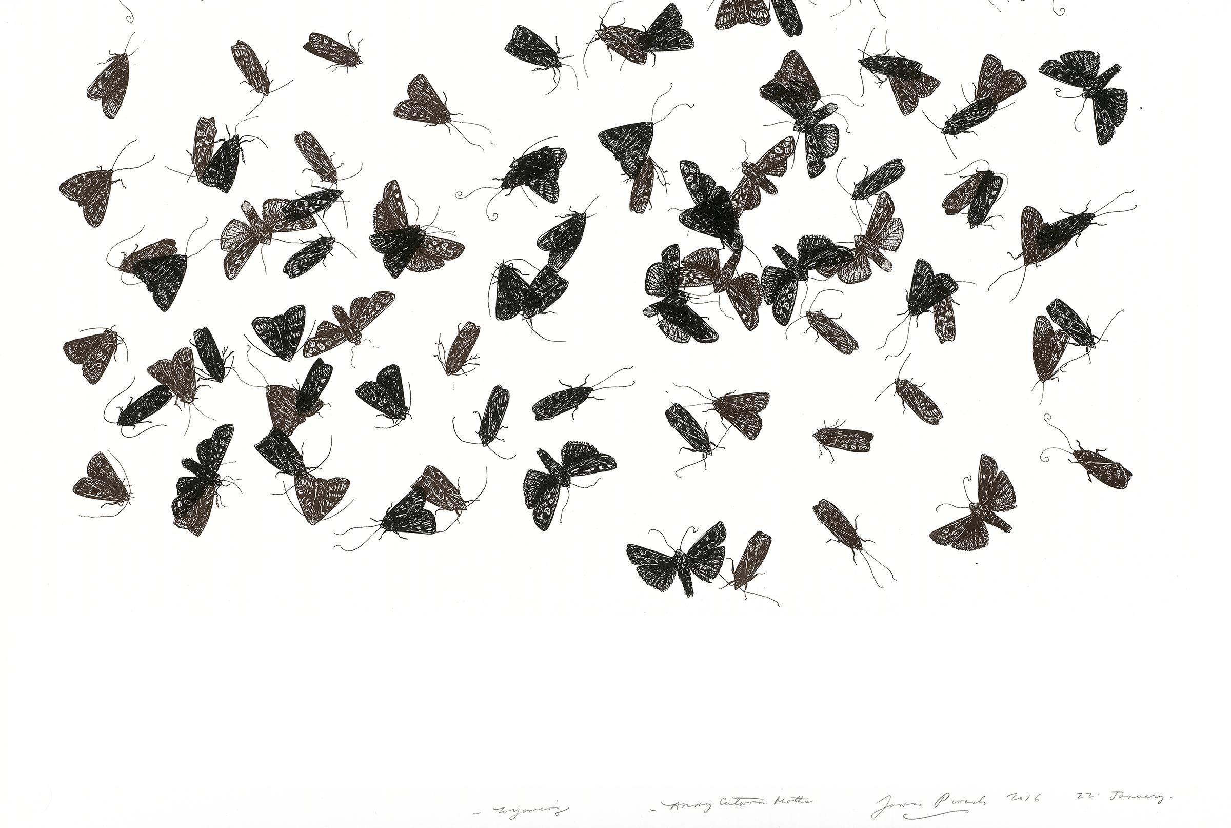 web-edit-2-jp_moths